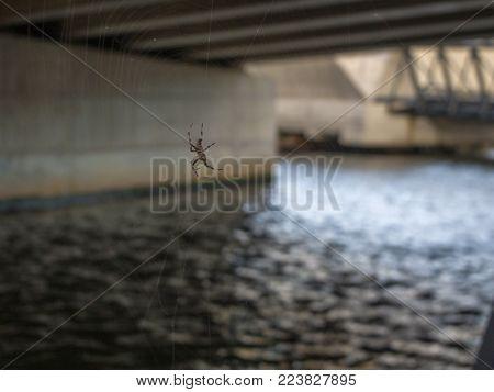 Spider Under Bridge