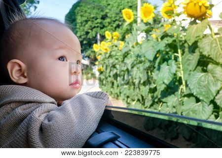 Cute asian little toddler baby boy in the car and observing flower from open window, little kid is looking at roadside sunflowers, curiosity concept