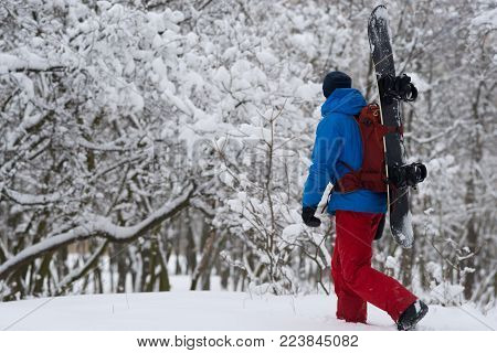 Snowboarder with backpack walks through the forest after snowfall, admiring snow covered trees on the slope - anticipation of adventure. Side view.