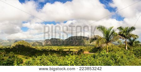 Panorama of the Valle di Vinales with the Mogotes and palm trees
