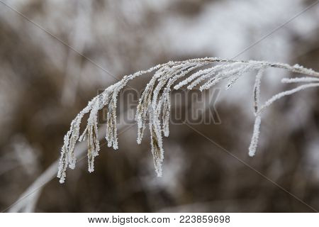 Branch Of Dried Flower Covered With Frost Close-up On A Natural Blurry Brown Background. Frozen Drie