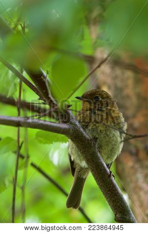 Young common sparrow on a branch in a tree