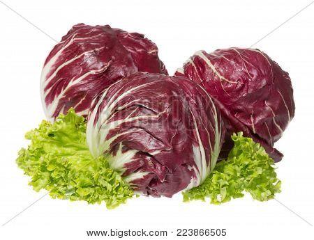 Three bright Radicchio with green salads. High resolution photo.