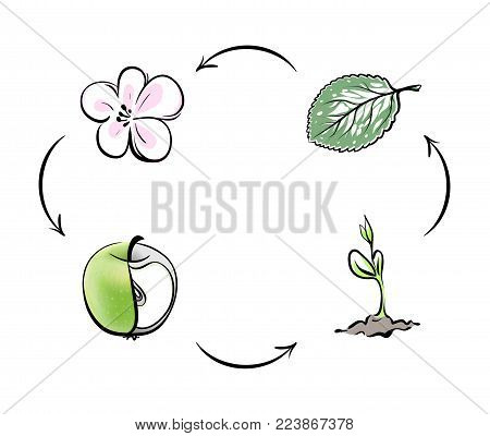 For example, the cycle of nature apple. Apple flower turns into a fruit, the fruit falls to the ground and turns into apple sprout, sprout becomes a tree, leaves and flowers appear. Cycle is closed.