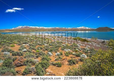 Laguna Blanca lake in National Park near Zapala town in Argentina, South America