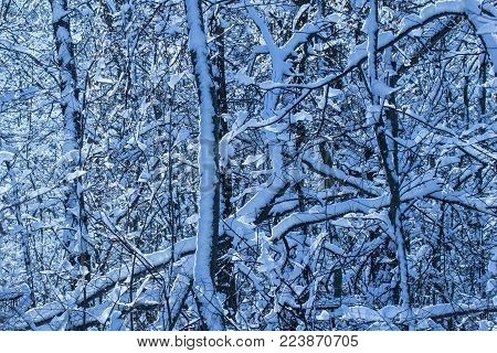 mysterious background winter forest in the evening bright and mesmerizing