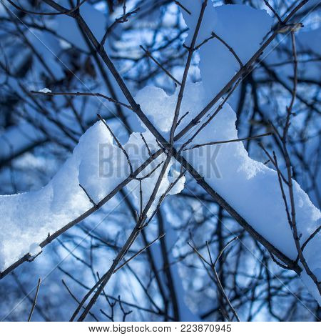 mysterious and breathtaking winter background thin crossed branches covered in fluffy snow beautiful evening