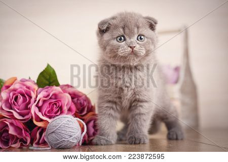 Pedigreed Cat. Cat Food Promotion. Cat Background. Images Picture For A Calendar With Cats.