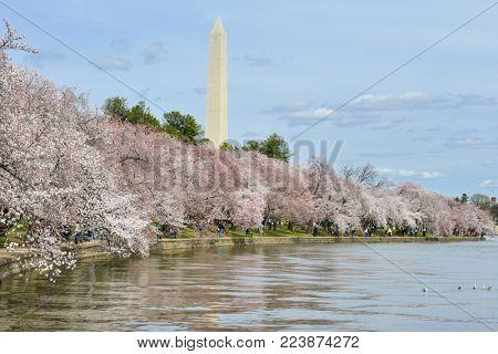 Washington Monument in springtime - Washington DC, United States
