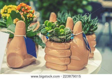 Young plants are succulent jade and small flowering plants in ceramic pots in the flower market. The horizontal frame.