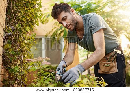 Outdoors portrait of young attractive bearded hispanic man in blue t-shirt and gloves working in garden with tools, cutting leaves, watering plants. Countryside life.