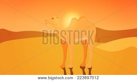 A two-humped camel. Bactrian. Cute camel with shadow. Domesticated animal from Central Asia. Beast of burden. Artiodactyla. Ship of the desert. On desert sunset background. Flat vector illustration.