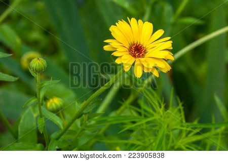 Yellow Flower On The Background Of Greenery