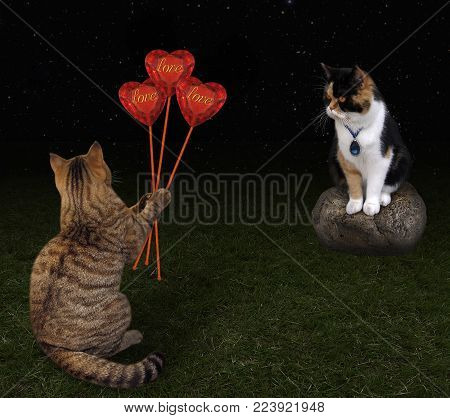 The cat gives a bouquet of ruby hearts to his beloved in the night.