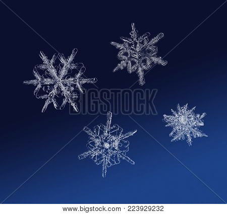 Real snow flake ice crystals macro compilation on dark background