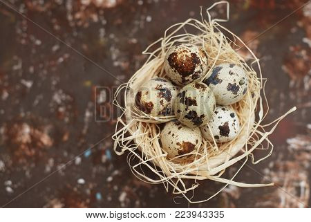Top View of Quail Eggs in Nest Isolated on Rusty Background with copy Paste