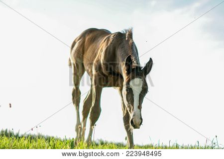 curious little foal, explore the world little animal, baby horse is looking for food