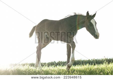 beautiful little horse playing, foal looking for food, amazing details