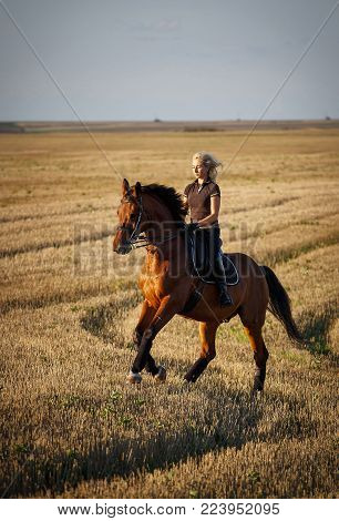 Horse, active recreation, sport and equestrian concept - sports woman on horse in field