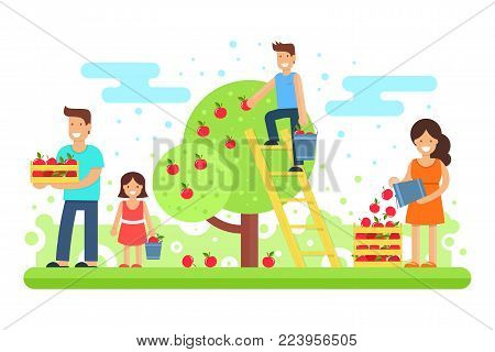 A happy family collects apple crops. Father, mother, son and the youngest daughter are collecting apples in the garden. Vector illustration. Joint work makes the family a solid and cohesive one.