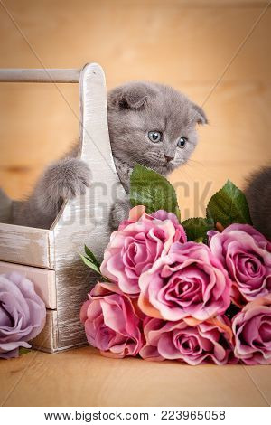 Scottish Fold Cat in decorative wooden box near bouquet of flowers.Cat at home. Scottish fold cat portrait