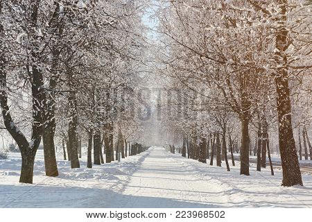 Winter snowy park background. Road snowy path scene theme