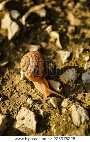 Snail crawling at the ground meeting with ant race. snail on the ground