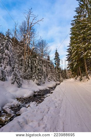 snow covered road along the path through forest. beautiful nature scenery in winter. location Synevyr National Nature Park, Ukraine