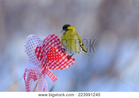 Small eurasian siskin (Spinus spinus) sits on a heart for Valentine's Day with soft dawn background.