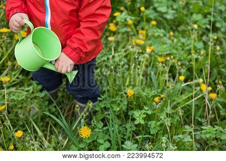 Little toddler in red jacket standing on green grass and watering dandelions from toy watering can, . Child helping in the garden. Boy with watering can in the park. Outdoors activities with children