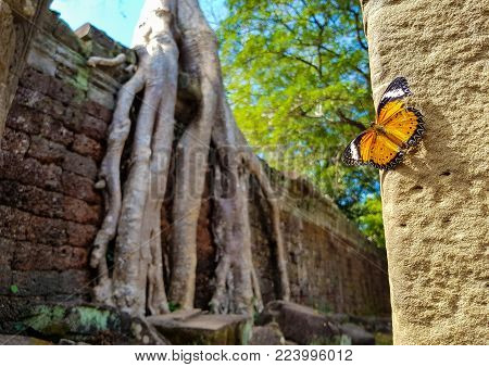 Butterfly on the ruins of Preah Khan temple in Siam Reap in Cambodia
