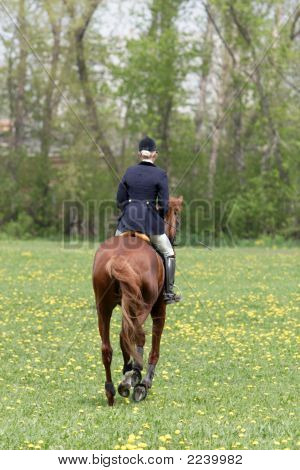 Young Horsewoman Goes On The Horse On A Meadow