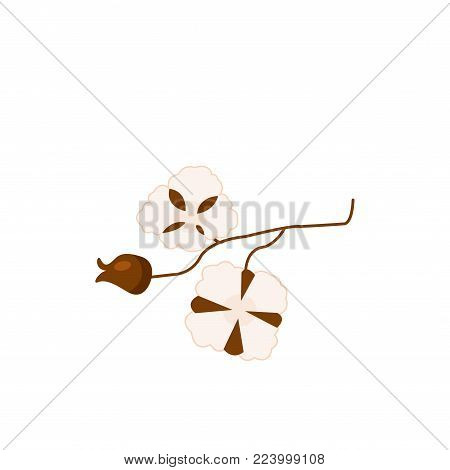 Cotton branch with seed bolls cartoon vector Illustration on a white background