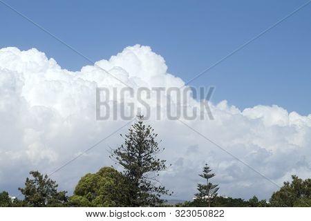 White and gray puffy clouds in the bright blue sky above the green trees poster