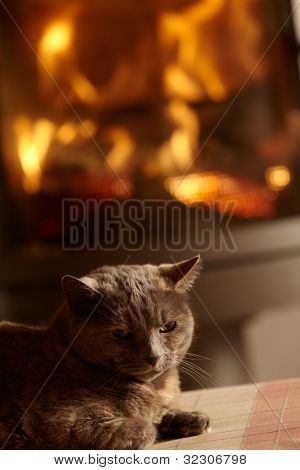 Close Up Of Cat Relaxing By Cosy Log Fire poster