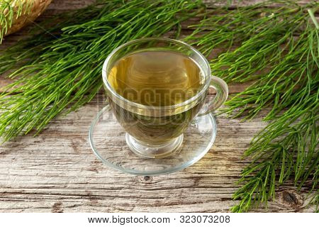 A Cup Of Horsetail Tea With Fresh Equisetum Arvense Twigs