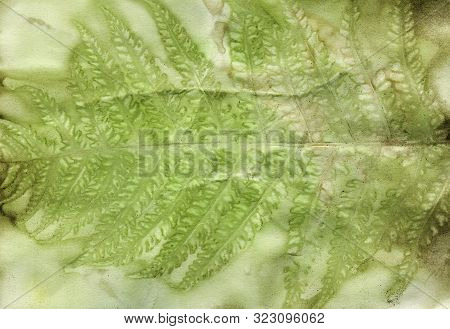 Fern Green Eco-print Vintage Paper, Natural Hand Print By Plants On Paper, Handmade Background