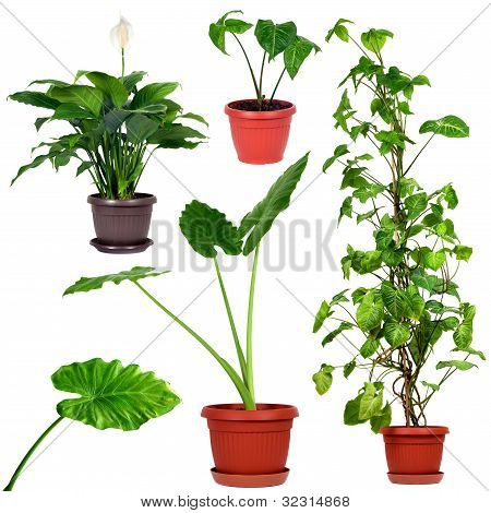 Collection Of Different House Plants