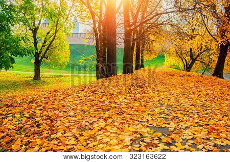 Fall sunny colorful landscape. Fall park trees and fallen autumn leaves on the ground along the fall park alley in sunny fall October evening