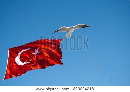 Seagull Flying By Turkish National Flag In Blue Sky