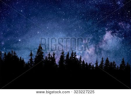 Night Starry Sky Over The Forest With Fir Trees.