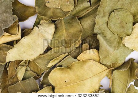 Makrut Lime Leaves Dry Herbs , Dry Herb And Spice