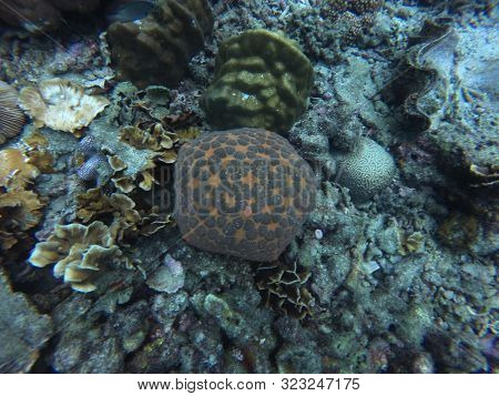 An Orange Cushion Seastar, Culcita Novaeguineae, Between Different Types Of Coral In A Reef