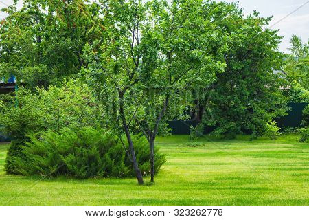 Landscape Design Of The Garden Plot. Fenced Yard With Lawn, Bushes And Trees.