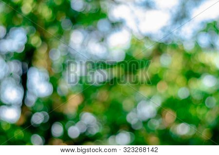 Blur Soft Focus Bokeh Green Leaves Background