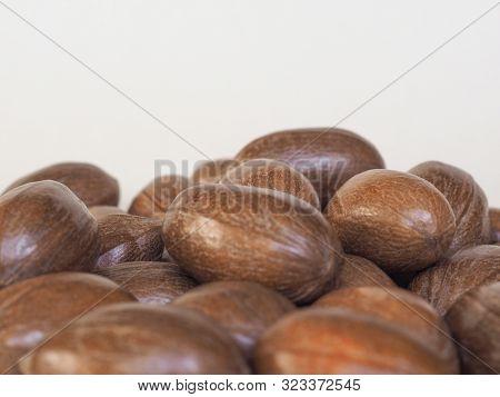 Pecan Nuts Uncracked