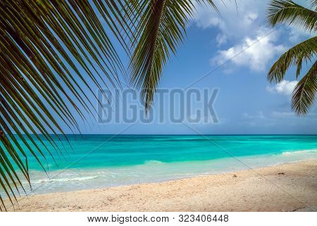 A Look At The Caribbean Sea Through The Branches Of A Coconut Palm. Landscape Of Paradise Tropical I