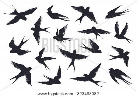 Flying Birds Silhouette. Flock Of Swallows, Sea Gull Or Marine Birds Isolated On White Background. V
