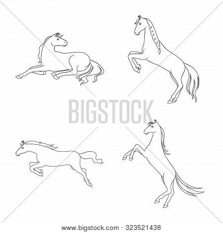 Isolated Object Of Stallion And Galloping Symbol. Collection Of Stallion And Riding Stock Vector Ill