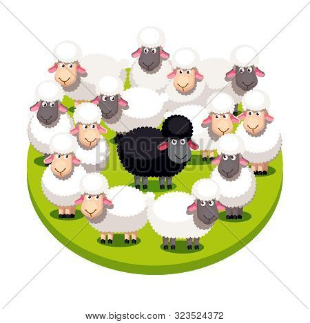 Special Black Sheep Standing Among White Sheep